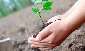Елордада жаңа туған әр нәрестеге бір ағаштан отырғызылатын болады
