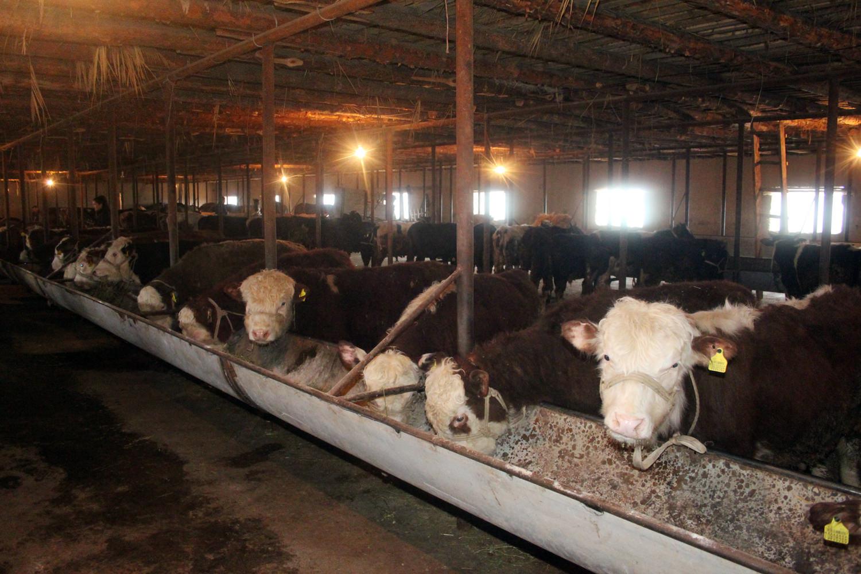 Шағын жылыжайдан бастаған қазығұрттық шаруа бүгінде ірі фермерге айналды