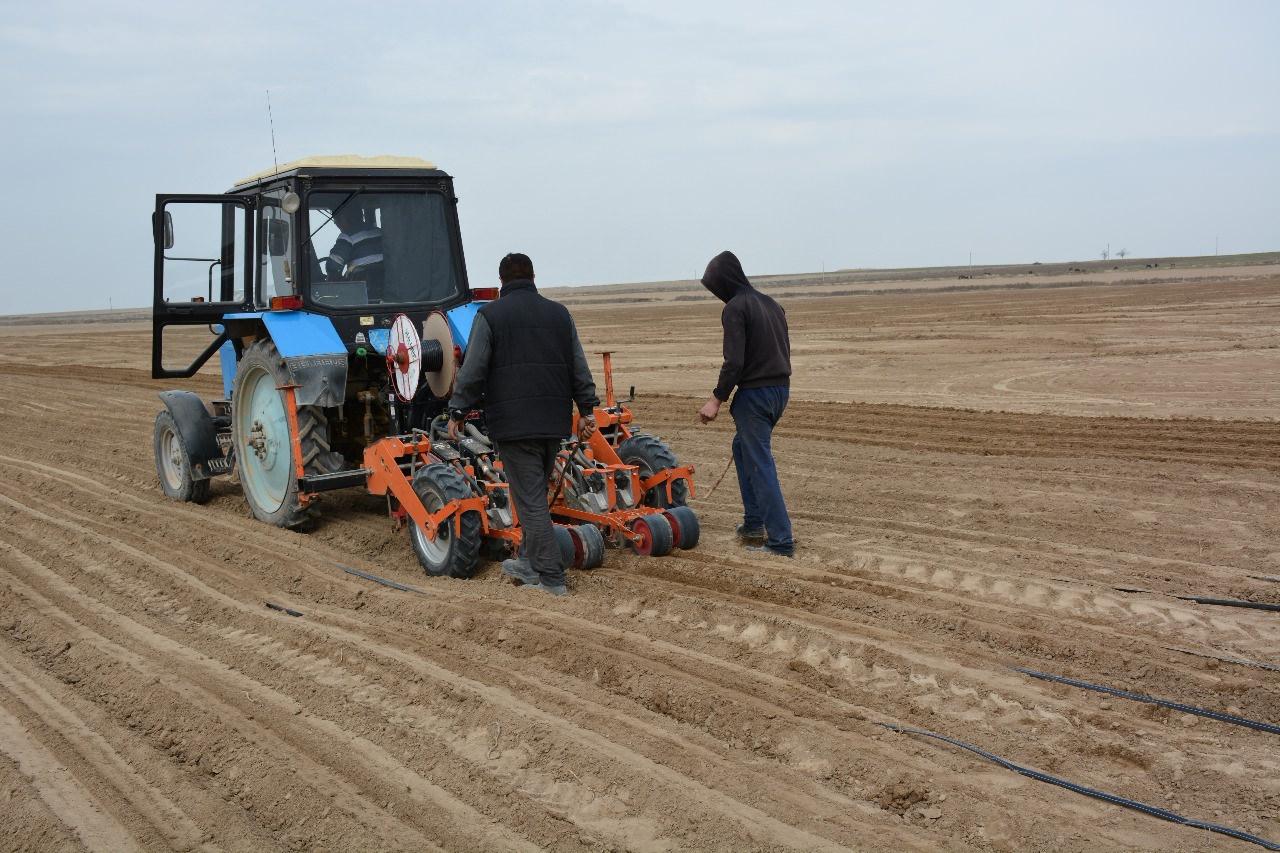 ОҚО-да биыл егіс көлемін 833,1 мың гектарға жеткізу межеленіп отыр