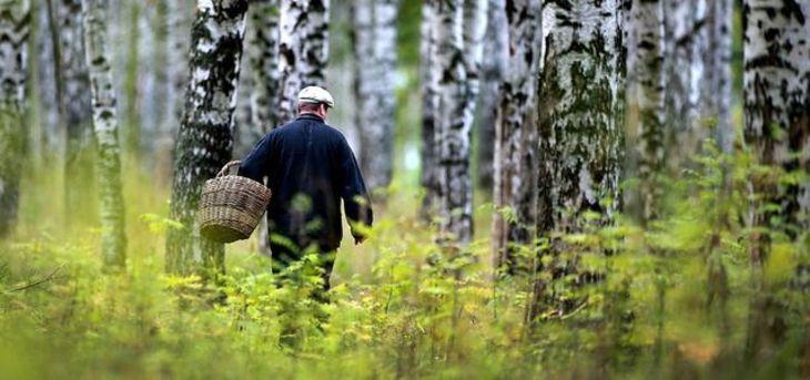 Павлодар облысында саңырауқұлақ теріп жүрген балықшы жоғалып кетті