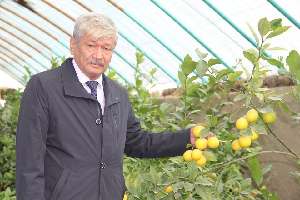 Жетісайлық шаруа лимоннан алғашқы өнім ала бастады