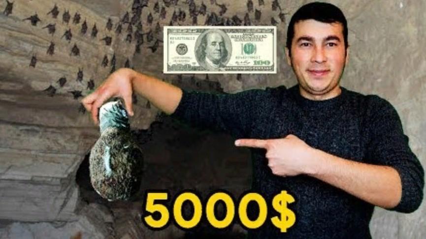 Өзбекстандықтар 5000$ тұратын жарғанаттың ұясы үшін тау-тасты кезіп кетті
