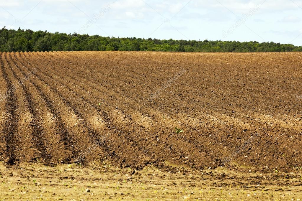 ТҮРКІСТАН: Ауыл шаруашылығындағы жер көлемі 16,3 мың гектарға артып отыр