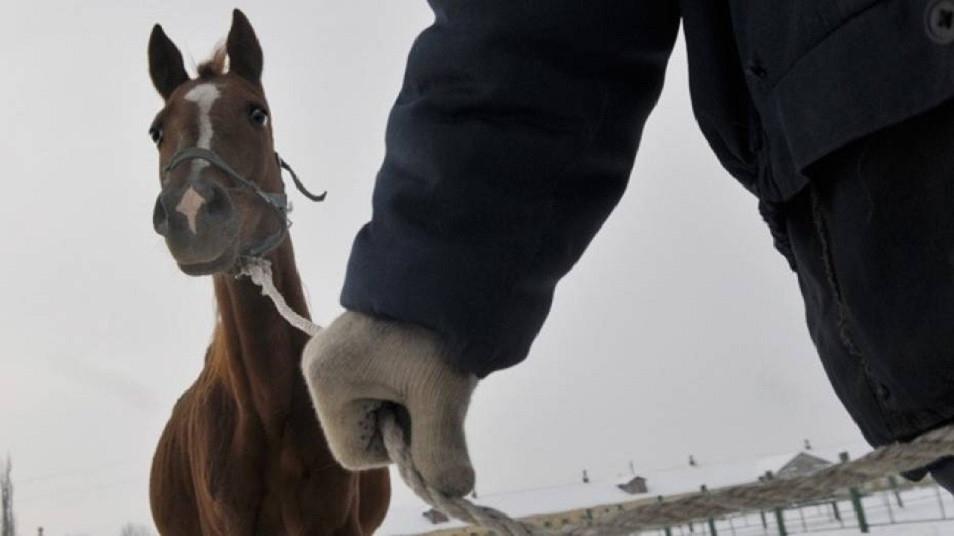 Алматы облысында мал ұрлығымен айналысқан 110 адам ұсталды
