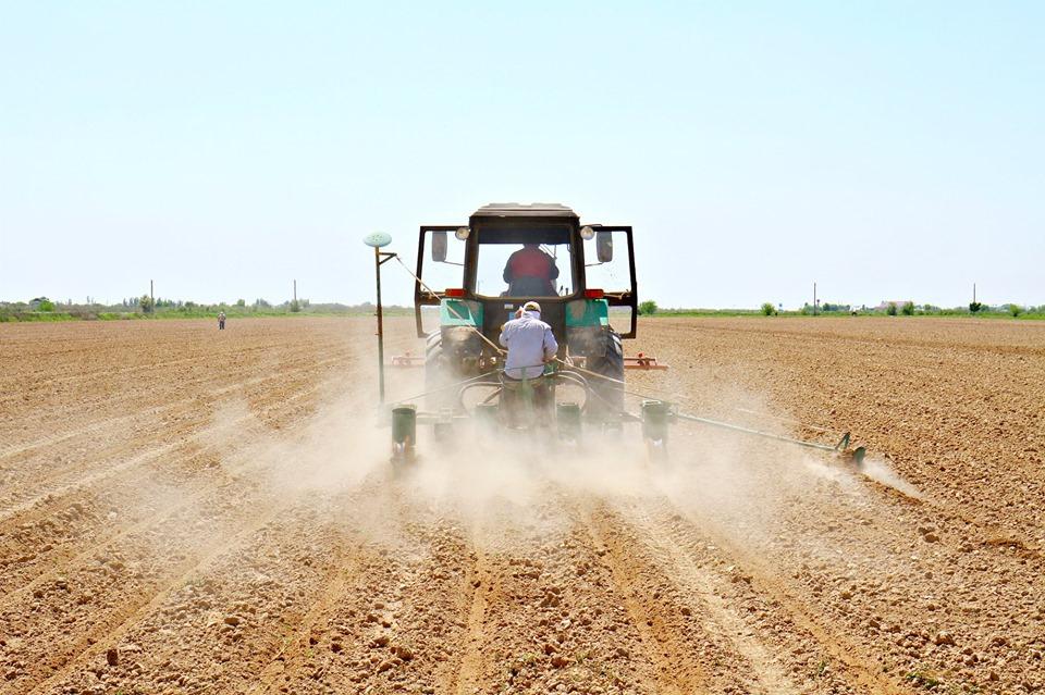 ТҮРКІСТАН: Мақтааралда 38 мың гектар жерге мақта егілді