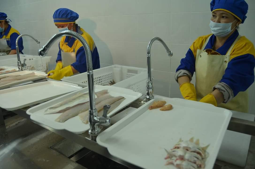 ТҮРКІСТАН: Шардаралық балықтар шартарапқа тарауда