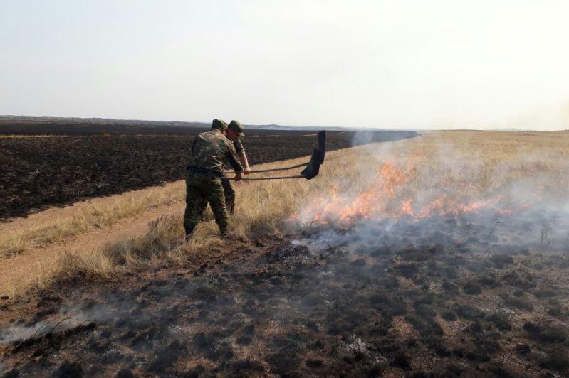 Ақмола облысында 800 гектардан астам жер отқа оранды