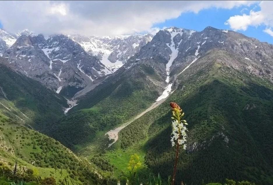 Шымкентте табиғи ұлттық парктің бұрынғы бас директоры сотталды