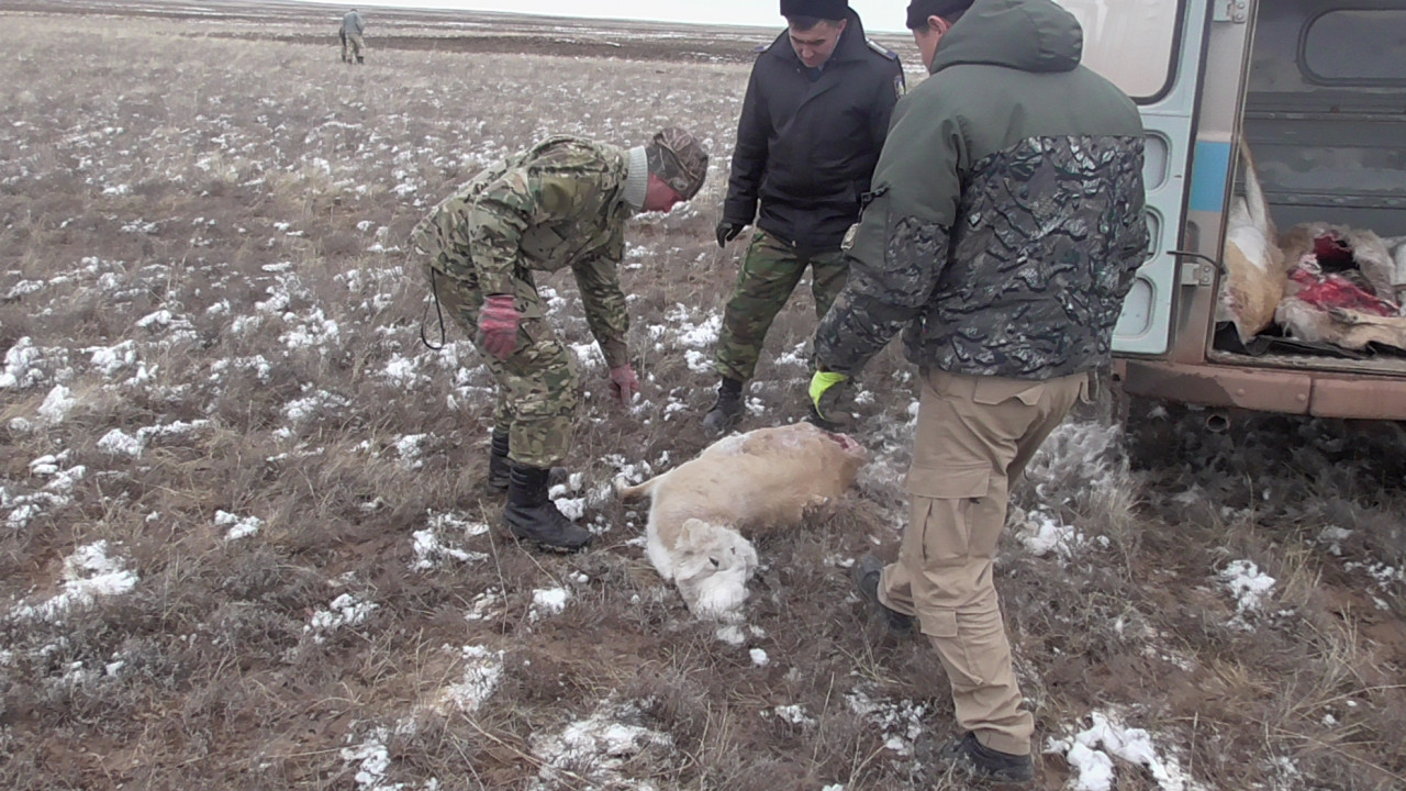 """""""Охотзоопром"""" қызметкерлерінің өздері браконьер болып шықты."""