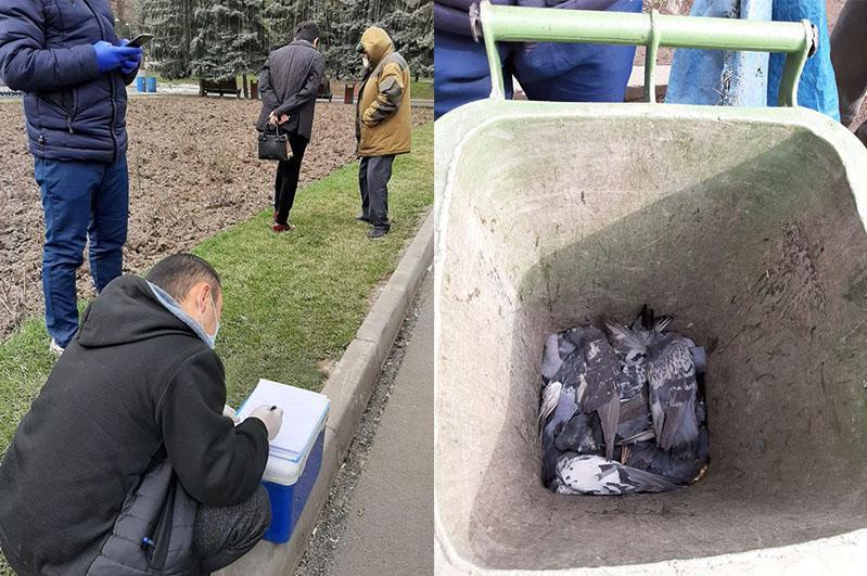 Алматы саябағында кептерлердің қырылуына не себеп болды
