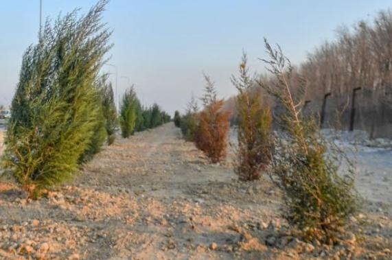 Түркістанды абаттандыруға аудан, қалалар көмектесіп жатыр