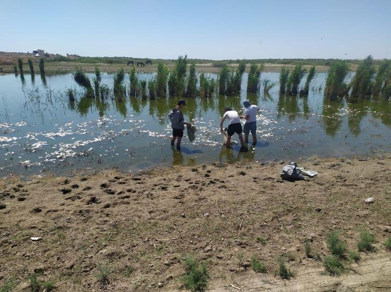 Атырау облысындағы каналда балықтың неден қырылғаны анықталды